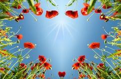 Biglietto di S. Valentino come cuore con i papaveri (14 febbraio, amore) Fotografie Stock Libere da Diritti
