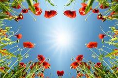 Biglietto di S. Valentino come cuore con i papaveri (14 febbraio, amore) Immagini Stock Libere da Diritti