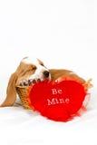 Biglietto di S. Valentino di basset hound immagine stock libera da diritti