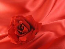 Biglietto di S. Valentino rosso della Rosa Fotografia Stock