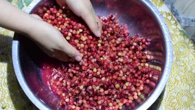 Bignay, Antidesma bunius home wine processing hand crushing of fruit. Close up stock video
