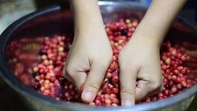 Bignay, Antidesma bunius home wine processing hand crushing of fruit. Close up stock video footage