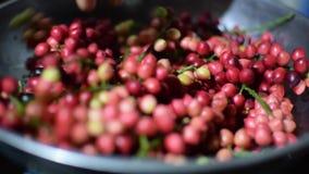Bignay, bunius Antidesma που είναι ζυγισμένη επεξεργασία εγχώριου κρασιού φιλμ μικρού μήκους
