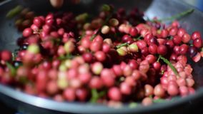 Bignay, bunius de Antidesma que es proceso casero pesado del vino metrajes