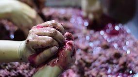 Bignay dirige o vinho que processa muitas mãos que esmagam, triturando e espremendo do fruto vídeos de arquivo