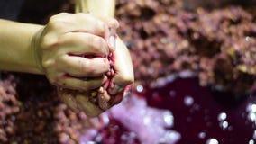Bignay si dirige il vino che elabora la mano che schiaccia, schiacciante e schiacciante della frutta archivi video
