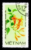 Bignonia venusta, Creeping flowers serie, circa 1980. MOSCOW, RUSSIA - MARCH 28, 2018: A stamp printed in Vietnam shows Bignonia venusta, Creeping flowers serie royalty free stock photography
