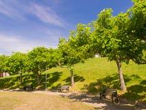 Bignonoides de Catalpas en el parque de Compostela Imagen de archivo