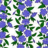 bigorneau élégant floral de fond vinca tendre sans couture de fleur de modèle ornement féminin sans fin de catharanthus Images libres de droits