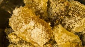Bihonung som samlas i den gula honungskakan Arkivfoton