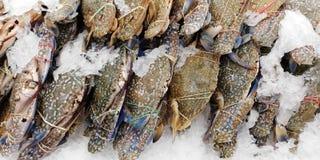 Biig prawn with ice in the market. Fresh big crabs with ice in the market Stock Photos