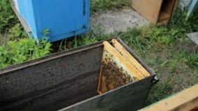 Bij, bijenbijenkorven in de tuin, bijenstal stock video