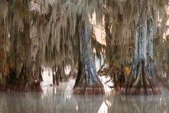 Bij dageraad, de bomen van een kale cipres met het hangen van Spaans mos royalty-vrije stock afbeelding