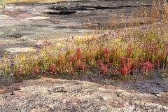 Bij de bloei van de steengrond met meer gras Royalty-vrije Stock Afbeelding