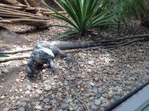 Bij de dierentuin Stock Afbeelding