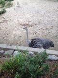 Bij de dierentuin Stock Fotografie
