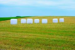 Bij de landbouwbedrijven in Kupiskis-district Litouwen stock afbeelding