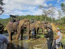 Bij de plaats zijn er drie olifanten met ijzerbanken op hun die ruggen, op berijdende toeristen in Prenn-park worden voorbereid D stock foto's