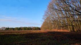 Bij de rand van het bos stock foto's