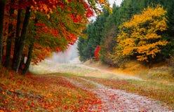 Bij de rand van het de herfstbos stock foto's
