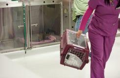 Bij een bezige veterinaire praktijk Stock Foto