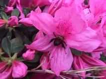 Bij in een bloem Stock Foto's