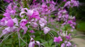 Bij of een insect en een bloem royalty-vrije stock afbeeldingen