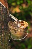 Bij een rubberaanplantingsreeks   Royalty-vrije Stock Fotografie