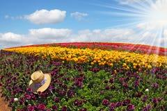 Bij een strook van purpere bloemen verlaten strohoed Stock Foto