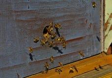 Bij en bijenkorf in de lente stock afbeeldingen