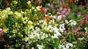 Bij en bloemen stock video
