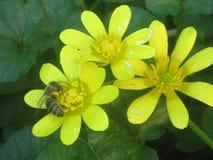 Bij en bloemen royalty-vrije stock afbeelding