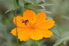 Bij en bloemen Royalty-vrije Stock Foto