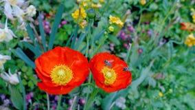 Bij en bloemen op een de lentedag Stock Fotografie