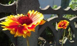 Bij en heldere bloemen Stock Foto's