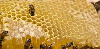 Bij en honing royalty-vrije stock afbeeldingen