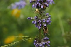 Bij en spin in de zomer in tuin op bloemsteel royalty-vrije stock foto's