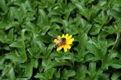 Bij en weinig bloem Royalty-vrije Stock Foto