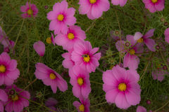 Bij het bestuiven bloemen in de tuinen van Alhambra Stock Foto's