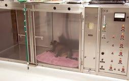 Bij het huisdierenziekenhuis Stock Foto's