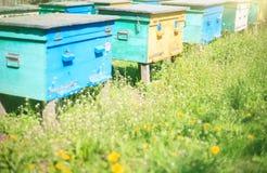 Bij-Hued houten bijenkorven in een bijenstal op een de zomer zonnige dag royalty-vrije stock afbeeldingen