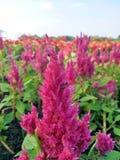 Bij met bloem op vage achtergrond stock afbeelding