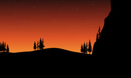 Bij nachtsilhouet van boom Royalty-vrije Stock Afbeeldingen