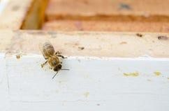 Bij op bijenkorf Stock Foto