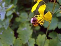 Bij op bloem stock foto's