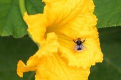 Bij op bloem royalty-vrije stock foto