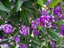 Bij op bloem Stock Foto
