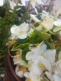 Bij op bloemen stock foto's