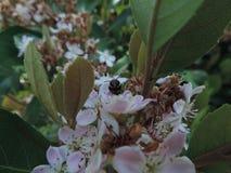 Bij op bloemen royalty-vrije stock afbeeldingen