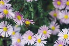 Bij op de bloem Stock Afbeeldingen